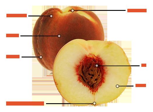 Washington State Fruit